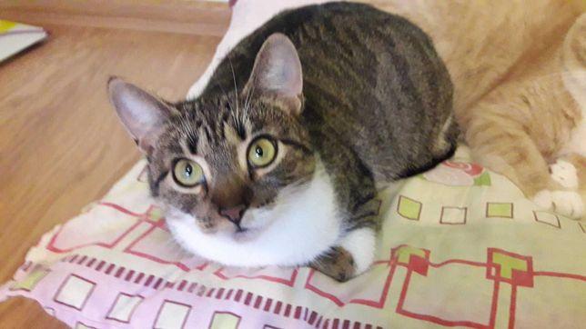 Ищет новый дом кошка Тина (1 год, стерилизованная)