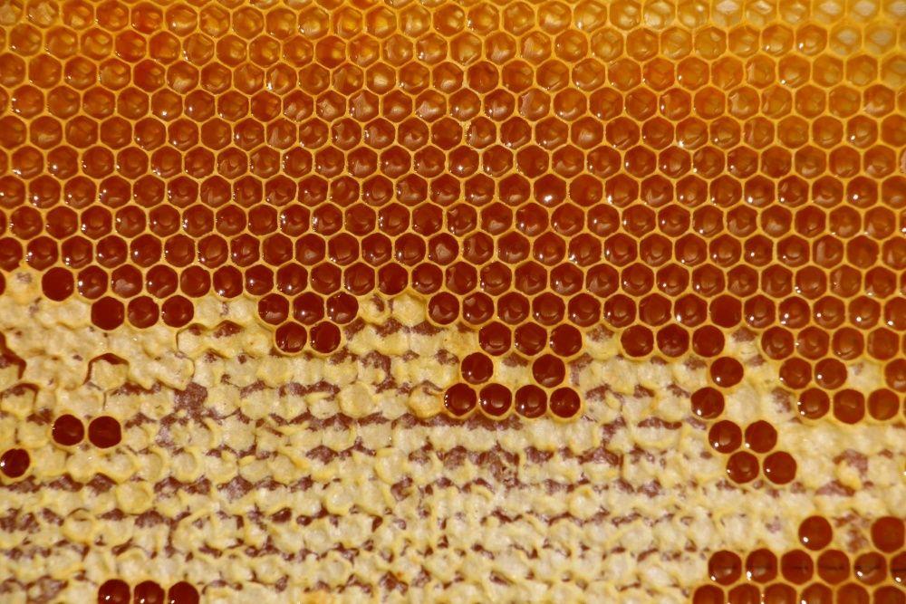 Екологічний мід різнотрав'я з власної пасіки 2020 вересень мед соти Львов - изображение 1
