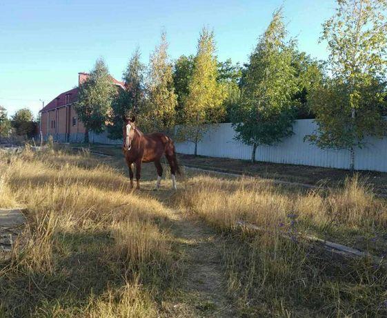 Продам участок под строительство в Кутузовке