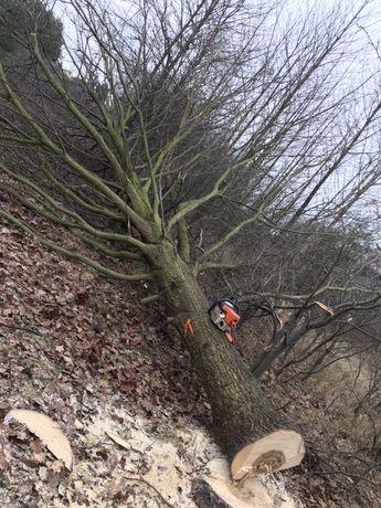 Wycinka drzew za drewno. Lasy, działki, nieużytki. Tanio