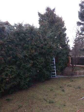 Wycinka drzew, Przycinka, Przycinanie żywopłotu, Usługi Rębakiem
