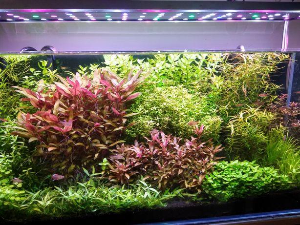 Rośliny - zestaw