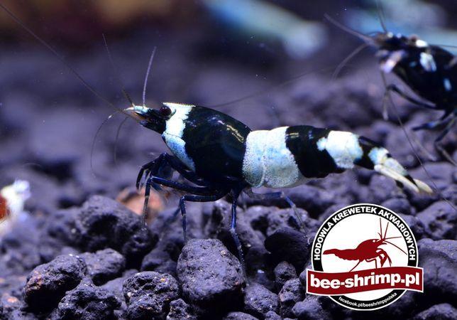 Taiwan Bee Black Mix