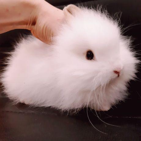 Миниатюрные супер мини карликовые кролики и клетки
