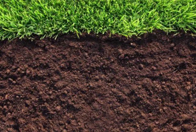 Ziemia pod trawnik, Ziemia ogrodowa, Ziemia, Humus