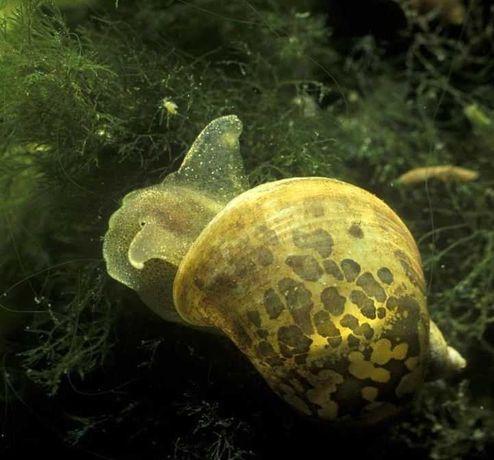 ślimaki na roslinki