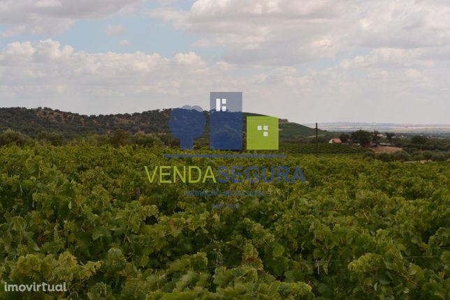 Vende-se terreno agrícola com vinha e olival | Vila de Frades