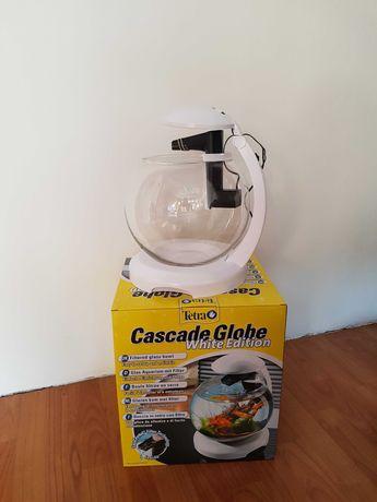 Akwarium Cascade Globe Tetra