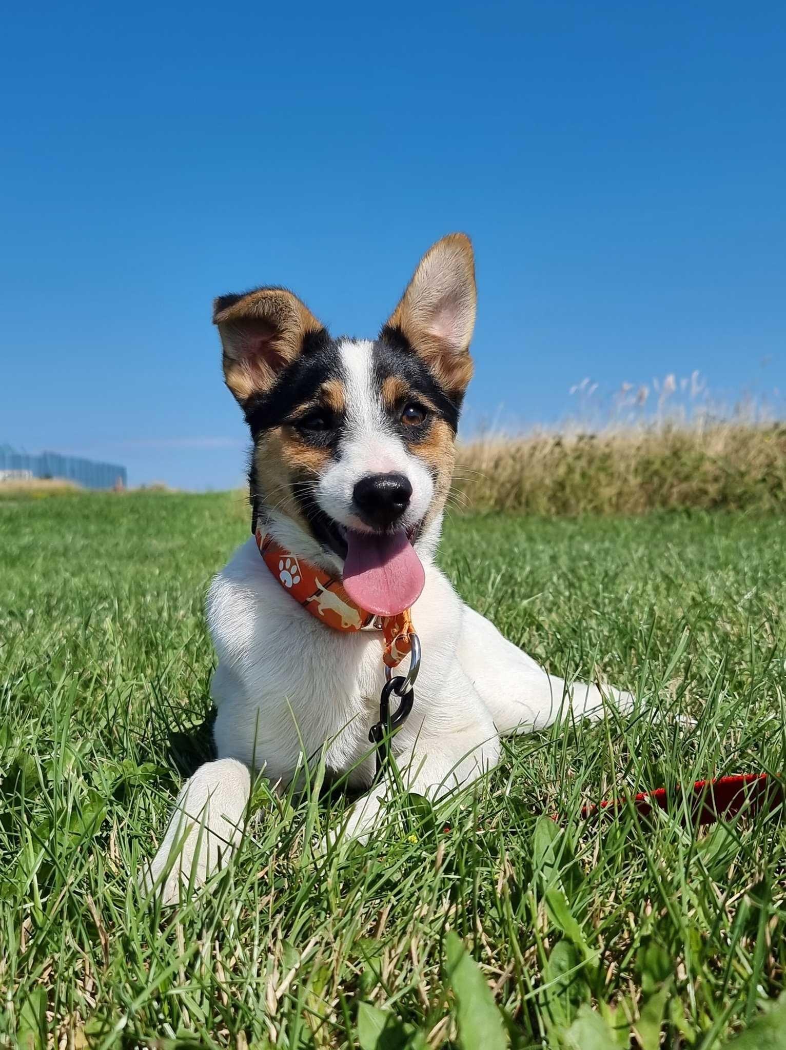 Koluszki znaleziono psa! Szukamy właściciela!