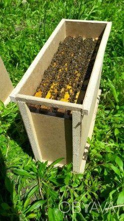 Продам пчелопакеты Карпатской породы пчёл на весну2021