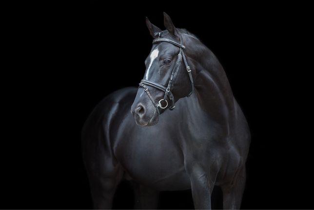 Конь мерин лошадь
