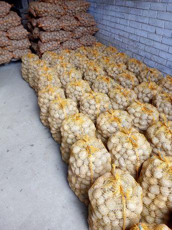 ziemniaki odmiany denar kaliber 35-55