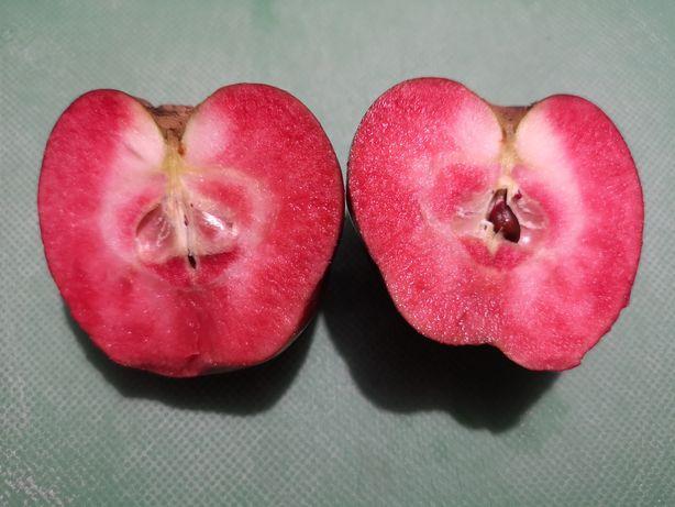 Macieira Maçã vermelha por dentro - FRUTA RARA