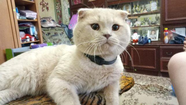 Кот вислоухий ищет кошечку для вязки