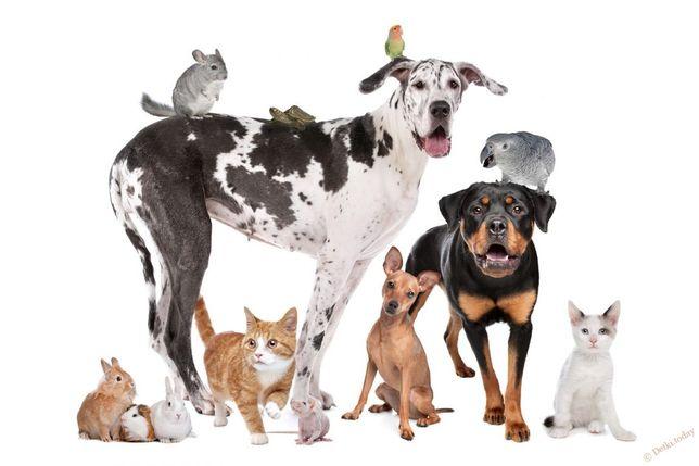 Присмотр за животными, передержка, выгул собак,уход за кошками