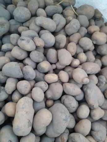 Sprzedam ziemniaki odpadowe