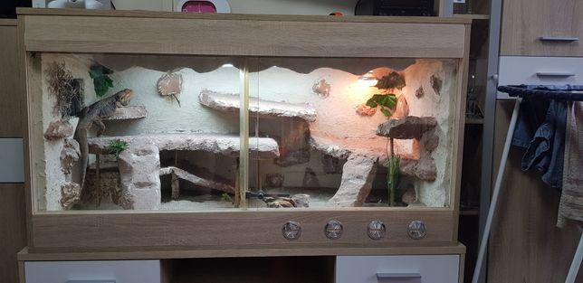 Terrarium Agama Brodata