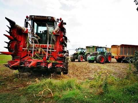 Zbiór kukurydzy na kiszonke AgriMax  Claas Jaguar l odwóz l ubijanie l