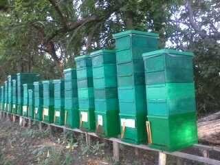 Продам пчеломаток