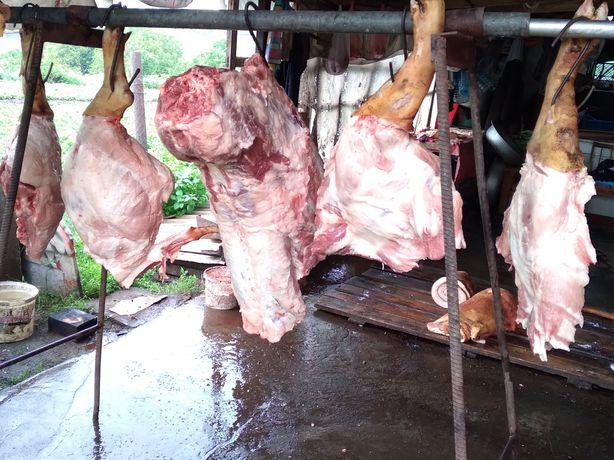 Продам тушки  свиней