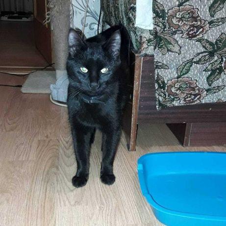 Новая семья для  черного кота