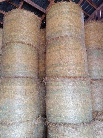 Sloma sucha pszenna