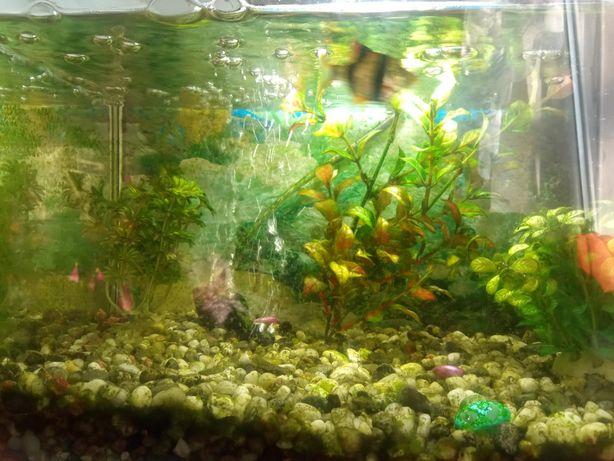 Akwarium z akcesoriami