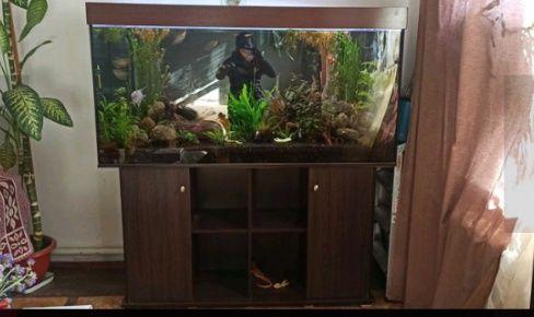 Продам срочно аквариум 500 литров
