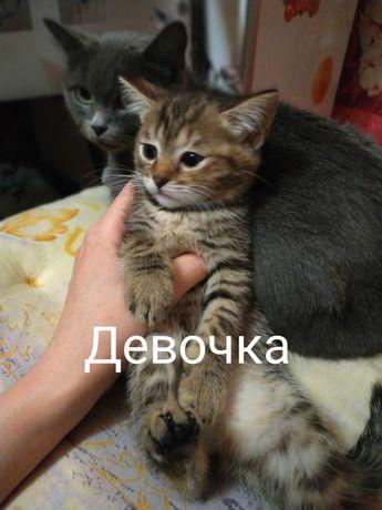 Отдам котят в хорошие руки. Котята