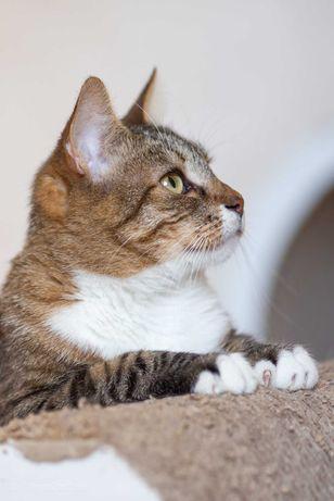 Лива - спокойное и преданное создание, кошка Киев