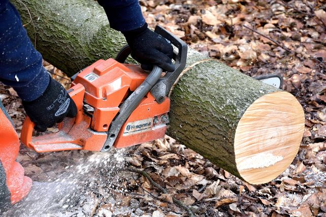 Wycinka drzew cięcia pielęgnacyjne wycinka lasów
