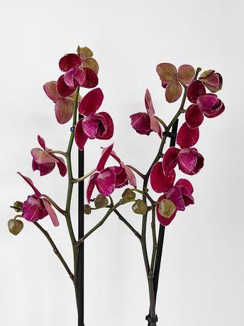Пишний орхідея фаленопсис Кімоно/ Phal. Kimono