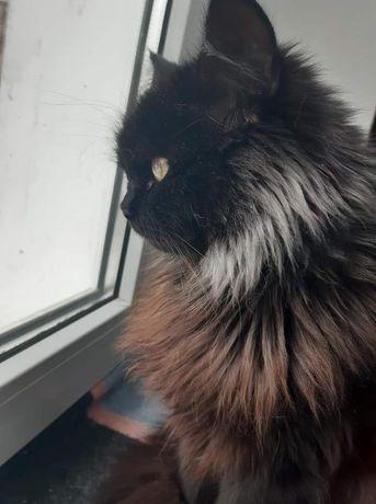 Шикарная молодая стерилизованная кошка ищет семью!