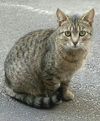 Кошечка стерилизованная