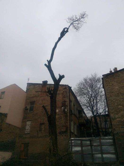 Альпинисты , услуги по обрезке деревьев в Одессе,спилить дерево цена Одесса - изображение 1