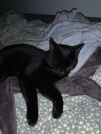 Zaginął Salem