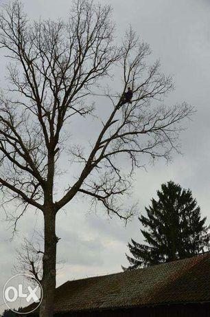 Alpinistyczne usuwanie trudnych drzew Arborysta warmińsko-mazurskie