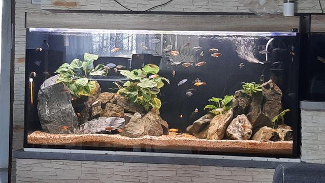 Sprzedam akwarium z pyszczakami lub samo szkło
