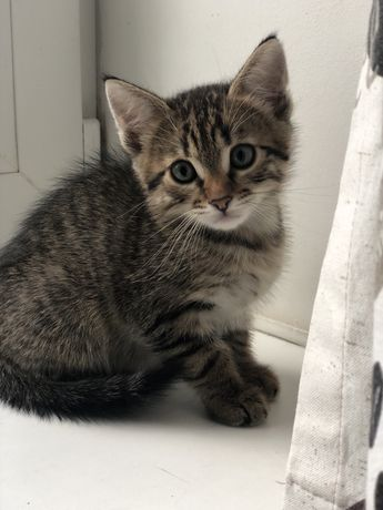 Ждет хозяина котенок котик полосатый