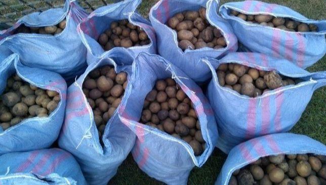 Ziemniaki dla drobiu/bydła cena za worek