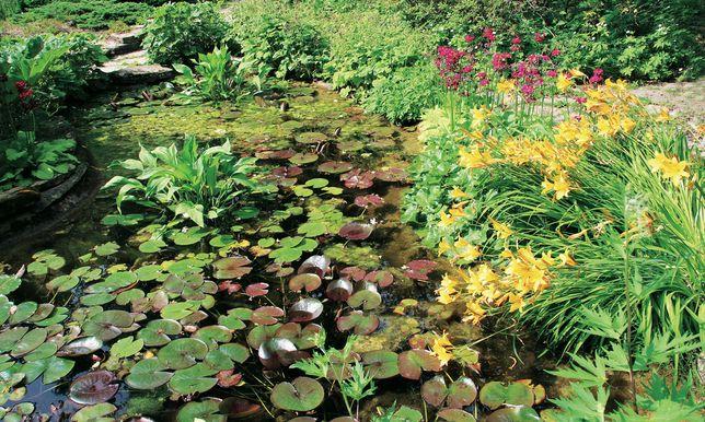 Plantas de lago Produção Nacional