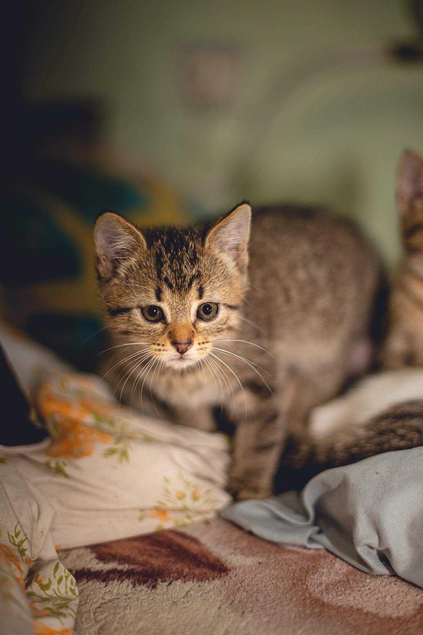 "Koci ""Raj"" poleca się z kociętami"
