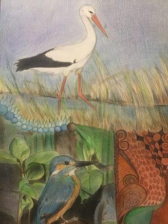Ptaki rysunek