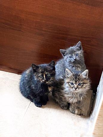 Віддамо котиків