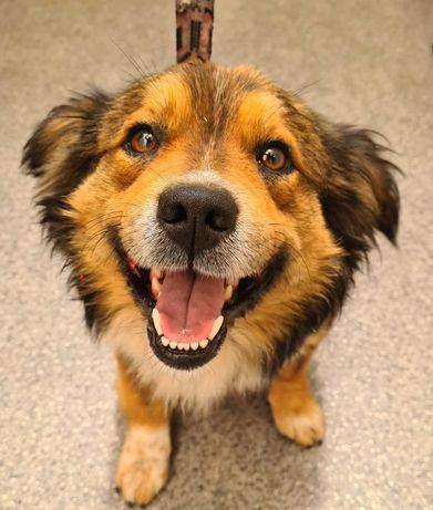 Łazy / Chruszczobród znaleziono psa! Szukamy właściciela!