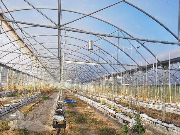 Arrenda-se urgente Terreno agrícola de 3380 m2 com estufa