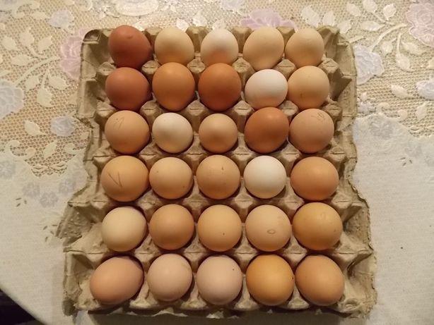 Инкубационное яйцо помесь кур разных пород
