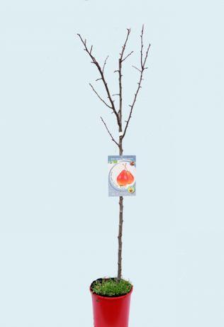 Arvore de fruto - pereira