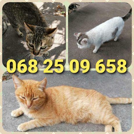 Хозяйка умерла - 2 кошки и кот ищут дом!