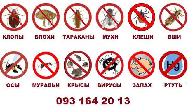 Уничтожение блох, клопов и вшей, тараканов и мышей.